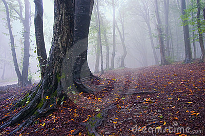 Autumn landscape of a forest with fog and leafs
