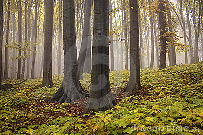 Autumn landscape from a forest with yellow leafs