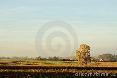 Autumn landscape of lonely tree at sunset