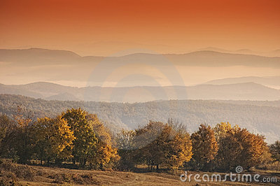 Autumn landscape with orange trees in morning ligh