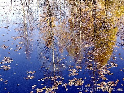 Autumn landscape. reflect