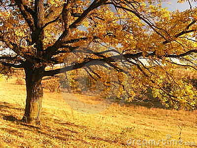 Autumn landscape with tree 2