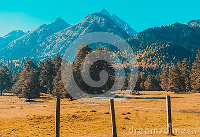 Autumn landscape, trees on the background of mountains, mountains, nature Stock Photo