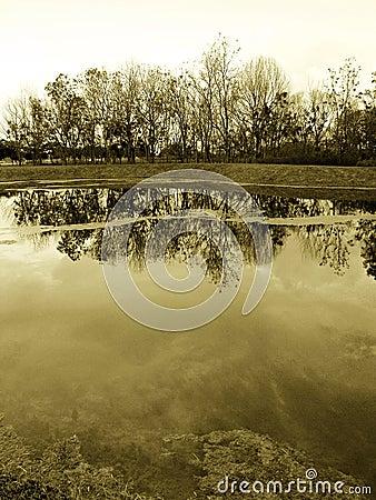 Autumn landscape, woods on lakeside, sepia