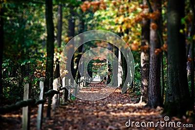 Autumn lane with trees