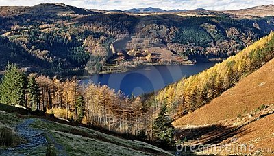 Autumn Larches, Thirlmere