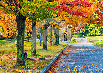 Autumn Laves at Hiroshima Central Park
