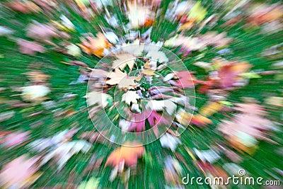 Autumn lawn