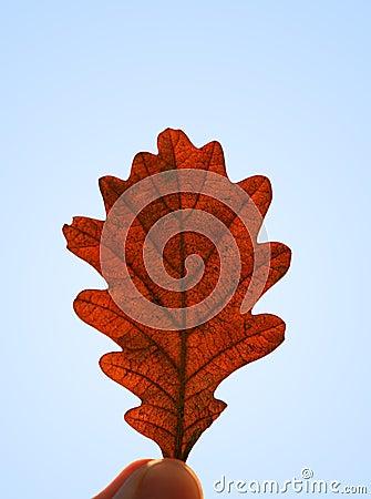 Free Autumn Leaf Royalty Free Stock Image - 10991246