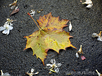 Autumn leaf.