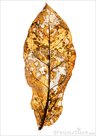 Free Autumn Leaf Royalty Free Stock Photos - 16710538