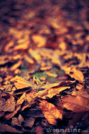 Free Autumn Leaf Stock Photos - 21691013