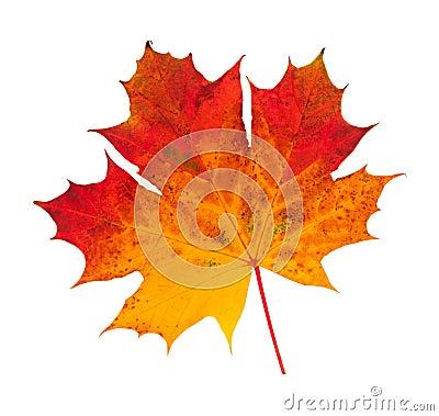Free Autumn Leaf Stock Image - 22014191