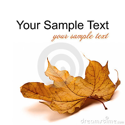 Free Autumn Leaf Royalty Free Stock Photography - 22404847