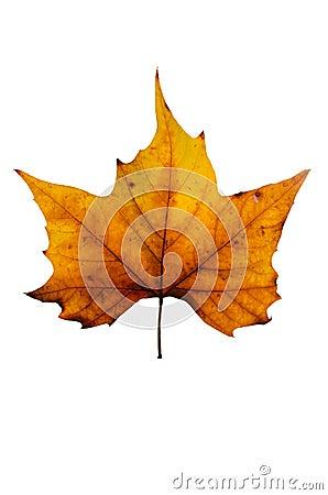 Free Autumn Leaf. Stock Image - 29052121