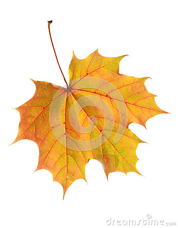 Free Autumn Leaf Royalty Free Stock Photography - 44982847