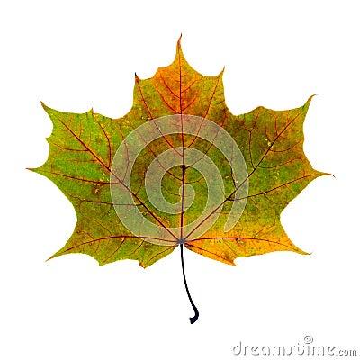 Free Autumn Leaf Stock Photo - 58798810