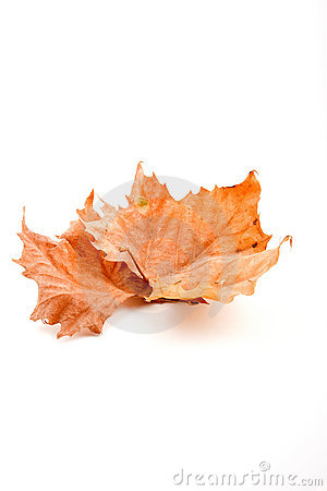 Free Autumn Leaf Stock Image - 6358591