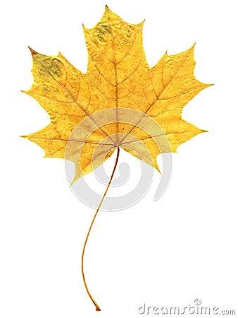 Free Autumn Leaf Stock Images - 6595454