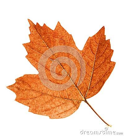 Autumn Leaf Stock Photo Autumn Leaves