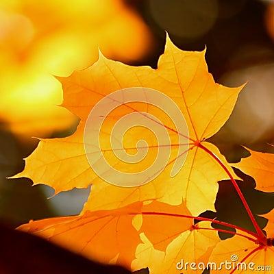 Free Autumn Leaf Background - Stock Photos Stock Photo - 56939760