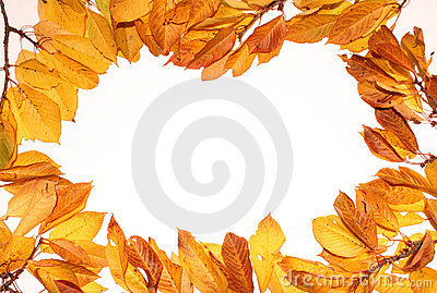 Autumn leaf backgrounds