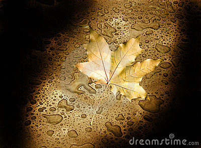 Autumn leaf in the darkness