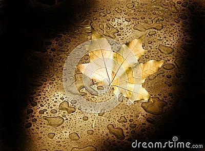 Autumn leaf in the darkness