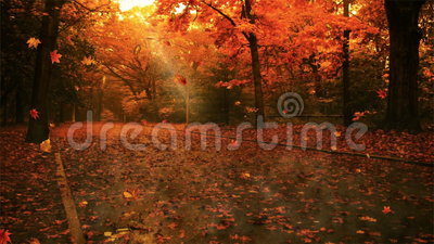 Autumn leaf fall. In the forest stock video
