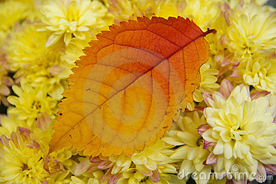 Autumn leaf and flowers