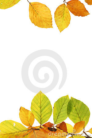 Free Autumn Leaf Frame Stock Images - 11354324