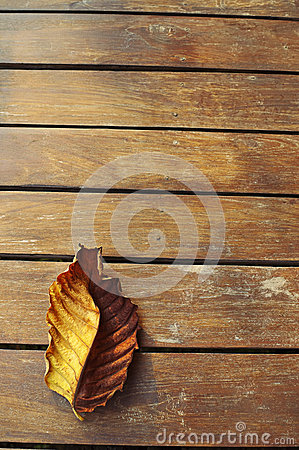 Autumn leaf over wooden background