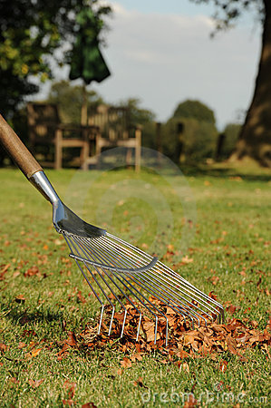 Autumn leaf raking