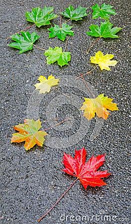 Autumn leaf on the street