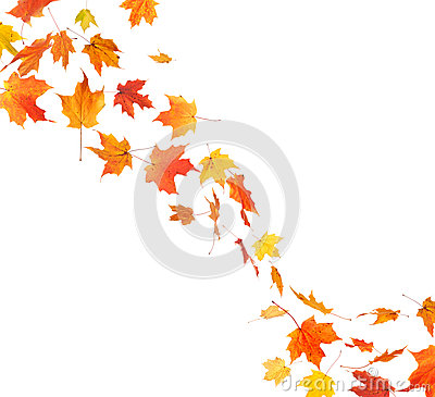 Autumn Leaf Swirl