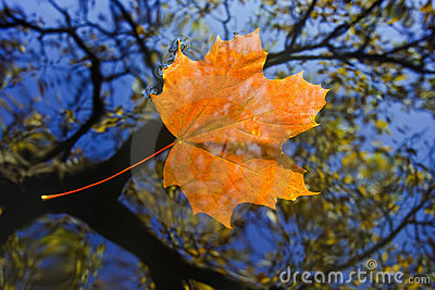 Autumn leaf on the water level