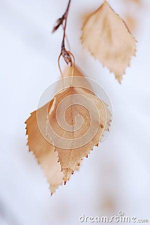Autumn leaf - zen