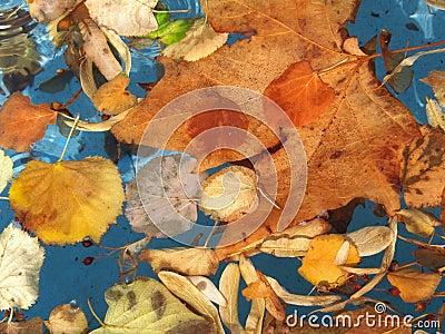 Autumn leafage