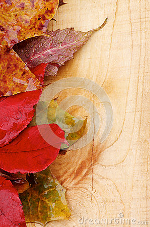 Free Autumn Leafs Stock Photos - 36492913
