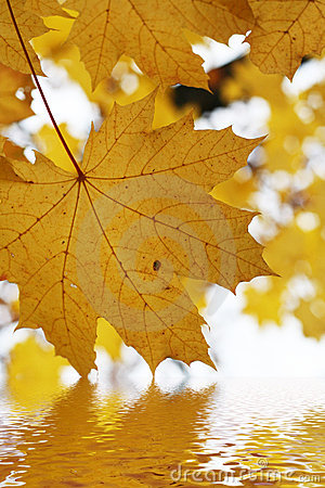 Free Autumn Leafs Above The Water Royalty Free Stock Photography - 6554207