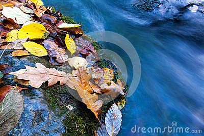 Autumn leafs near stream