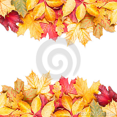 Free Autumn Leafs On White Background Stock Images - 32444254