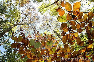 Autumn leafs and trees