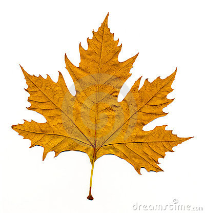 Free Autumn Leave Stock Images - 11593894