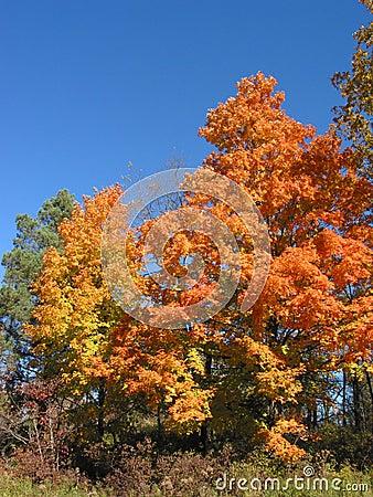 Autumn Leaves – 04_10_2_032