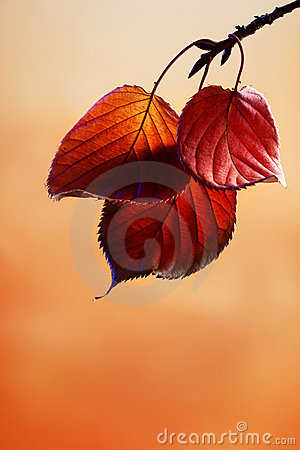 Free Autumn Leaves Royalty Free Stock Image - 11208216