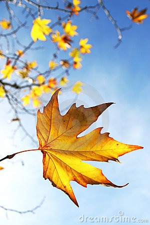 Free Autumn Leaves Royalty Free Stock Photo - 1230545