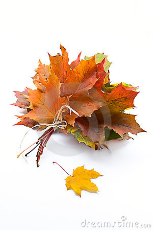 Free Autumn Leaves Stock Photography - 1439382
