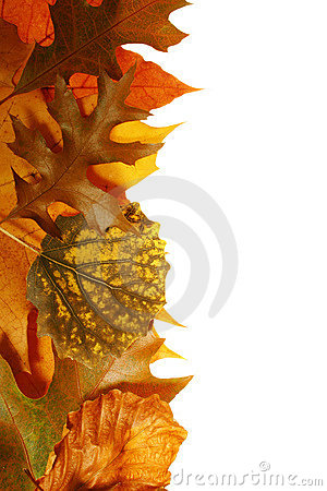 Free Autumn Leaves Royalty Free Stock Photography - 1532687