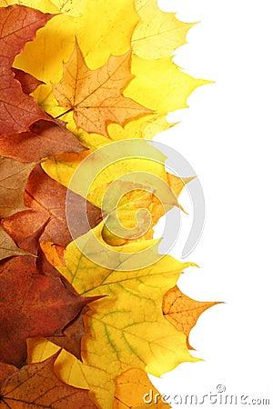 Free Autumn Leaves Stock Photos - 1532733